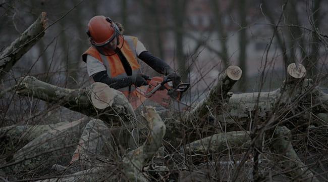Muscoy Tree Service